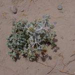 costa nostrum almiros beach land 3