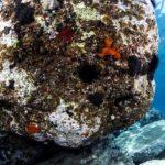 costa nostrum almiros beach marine 09