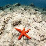 costa nostrum almiros beach marine 13
