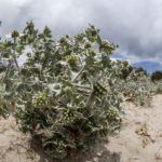 costa nostrum almiros beach wetland 3