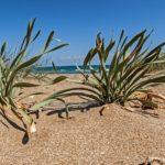 costa nostrum candia maris beach gallery 07