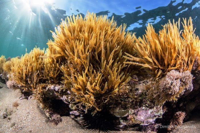 costa-nostrum-candia-maris-beach-gallery-39