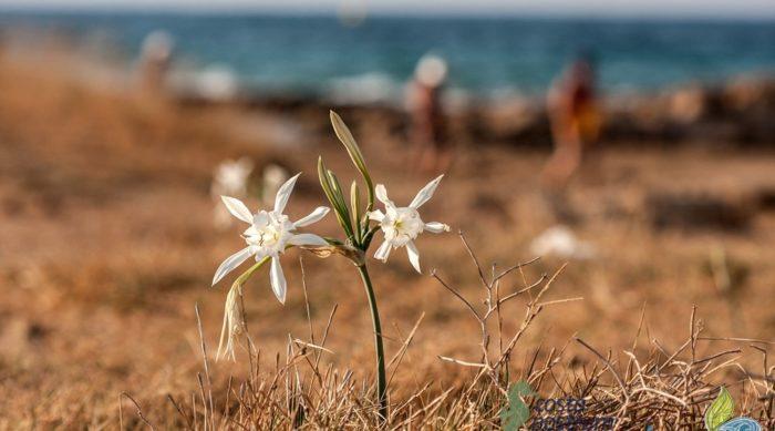 costa-nostrum-estauromenos-beach=hersonisos-crete-gallery-11