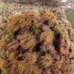 costa nostrum karteros akti beach heraklion crete flora fauna gallery 05