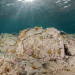 costa nostrum karteros akti beach heraklion crete flora fauna gallery 07