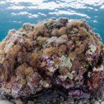 costa nostrum karteros akti beach heraklion crete flora fauna gallery 11