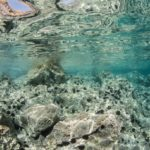 costa nostrum karteros akti beach heraklion crete flora fauna gallery 15