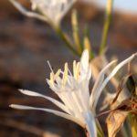 costa nostrum karteros akti beach heraklion crete flora fauna gallery 18