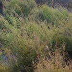 costa nostrum karteros akti beach heraklion crete flora fauna gallery 24