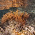 costa nostrum karteros akti beach heraklion crete flora fauna gallery 34