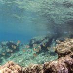 costa nostrum kitroplatia agios nikolaos beach gallery 01
