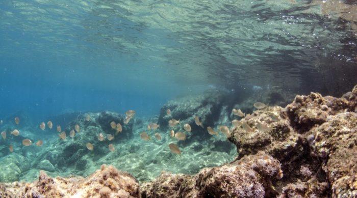 costa-nostrum-kitroplatia-agios-nikolaos-beach-gallery-01