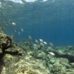 costa nostrum kitroplatia agios nikolaos beach gallery 13