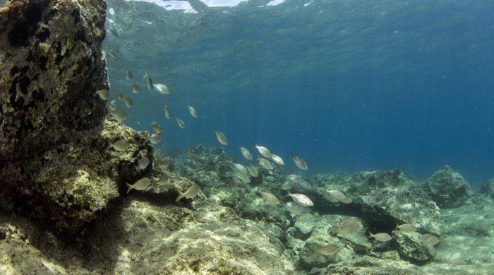 costa-nostrum-kitroplatia-agios-nikolaos-beach-gallery-13