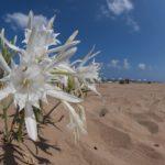 costa nostrum apollonia beach resort spa heraklion 029